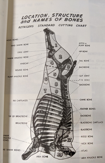 A diagram of bones in a side of meat that led Christie Teterenko down the rabbit hole.
