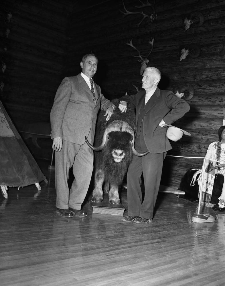 Eric Harvie and his friend Norman Luxton standing on either side of a stuffed musk-ox.