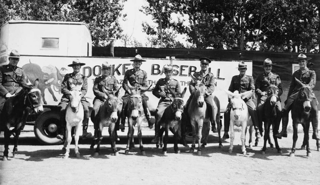 A weird, wacky and wild photograph of police officers riding donkeys ready to play donkey baseball