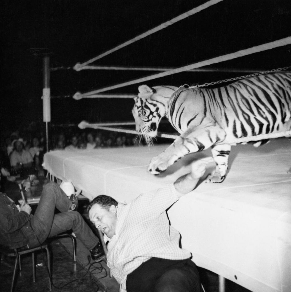 Bringing a tiger to a wrestling match is weird, wacky and wild