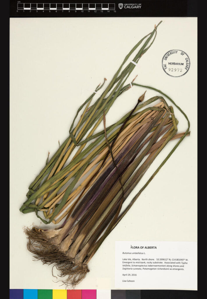 Digital collections and the natural world